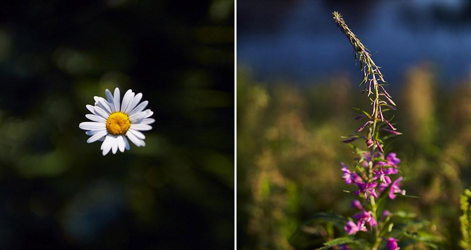 zdjecia plenerowe w Bieszczadach kwiaty