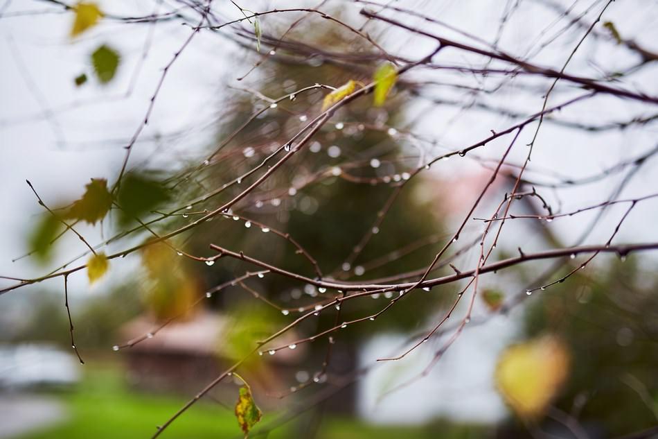 co zrobic gry pada deszcz na weselu fotograf krosno